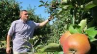 польша яблоки санкции