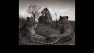 Novo trabalho fecha trilogia sobre ambiente e vida selvagem do leste da África