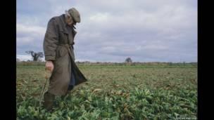 Sugar Beet Harvest, Norfolk, 2006. Jason Partyka