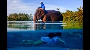 La verdadera casa de Twila, una joven nada en el mismo lago en que camina un elefante en Phuket, Tailandia