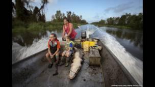 Caza de caimanes en Lac des Allemands, un lago en el estado de Lousiana, EE.UU.