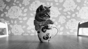 रॉन, बिल्ला