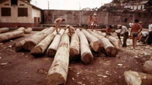 அரைக்கால் சட்டையுடன் மரத்துண்டுகளை மிதவையாக்கும் பணியில் குழுவினர்