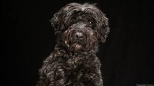 Shadow, perro negro fotografiado por Fred Levy. caninenoir.tumblr.com