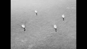 """""""Untitled (four swans)"""" (Sin título (cuatro cisnes) 2006. Cortesía ProjecteSD, Barcelona"""