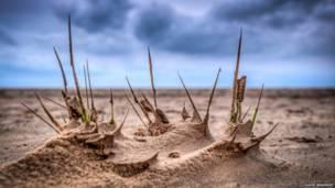 Brotes en la playa, Lytham St Annes, Inglaterra