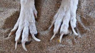 Perro con uñas largas