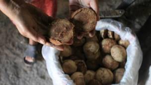 kebumen, gula merah, produksi, industri, kelapa, pesisir