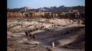 Caravana de camellos, 1980. Steve McCurry/Magnum Photos