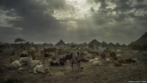 Un troupeau et du fumier en feu à Melut, Soudan du Sud.