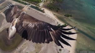 Águila volando sobre parque nacional en Indonesia