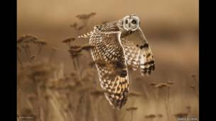 """Shoulder check"", de Henrik Nilsson"