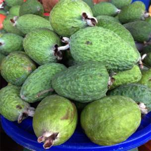 Feijoa (Acca sellowiana).