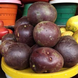 Gulupa (Passiflora pinnatistipula).