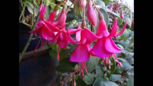 """Foto de una lectora de BBC Mundo por el tema """"rosada"""""""