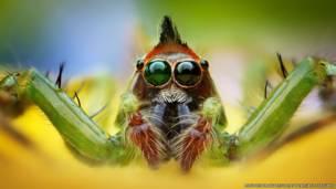 Fotógrafo indonésio registra closes coloridos de aranhas
