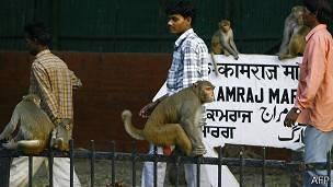 Monos en la calle
