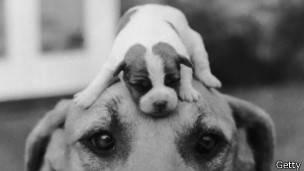 Mirar a los ojos de tu máscota hará que te obedezca más.