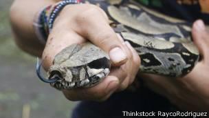 Serpiente boa