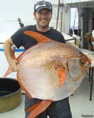 Investigadores estadounidenses acaban de descubrir el primer pez 100% de sangre caliente