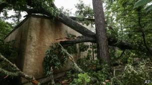 Árboles derribados por un tornado