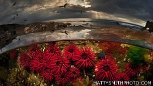 Crimson dawn. Foto: Matty Smith