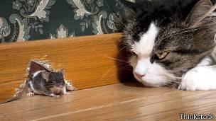 Ecuavisa - Como cazar ratones ...