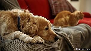Mascotas en un sofá