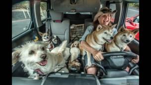 عاملة تريض الكلاب لجوانا سيغمان