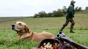 El perro llamado Gatillo que le disparó a su dueña en EEUU
