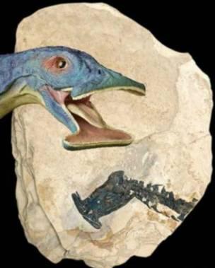 奇異濾齒龍頭部復原圖