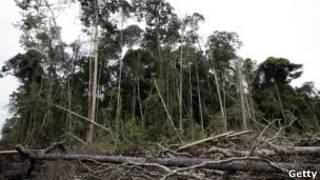 Hutan di Riau