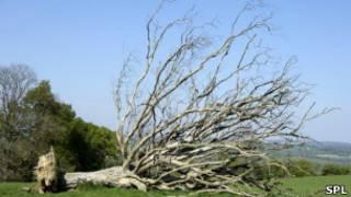 Un árbol caído