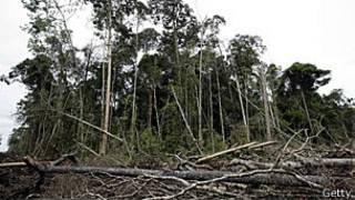 Destruição em floresta da Sumatra, na Indonésia (Getty)
