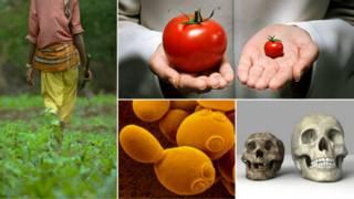 Collage de imágenes sobre nutrición