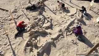 Excavaciones de fósiles de ballenas.
