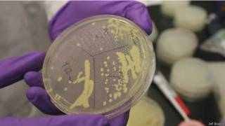 Cromosoma sintético de levadura
