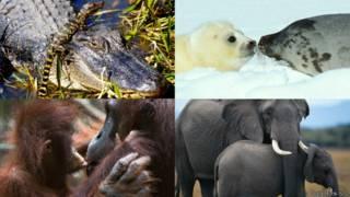 Mamás animales