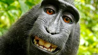 Selfie de un macaco tomada en Indonesia