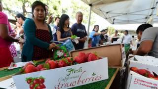 Fresas de California