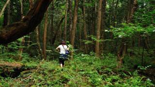 160112232027_japan_aokigahara_forest_624