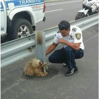 Funcionario de Ecuador con oso perezoso