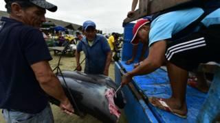 Pescadores ecuatorianos