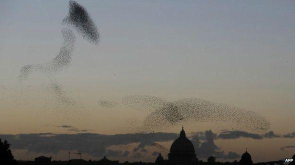 Estorninhos voam no céu de Roma