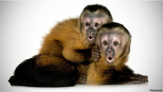 Monos