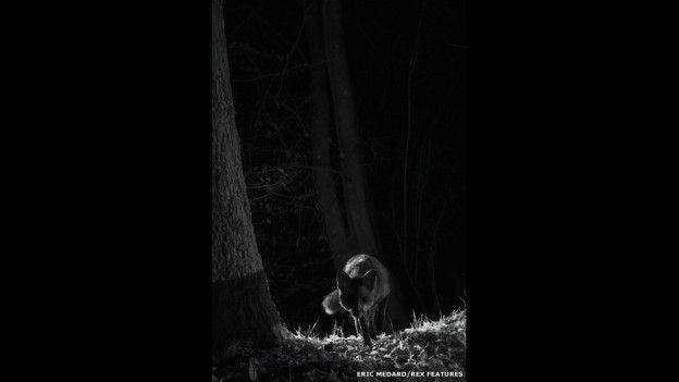 animales nocturnos