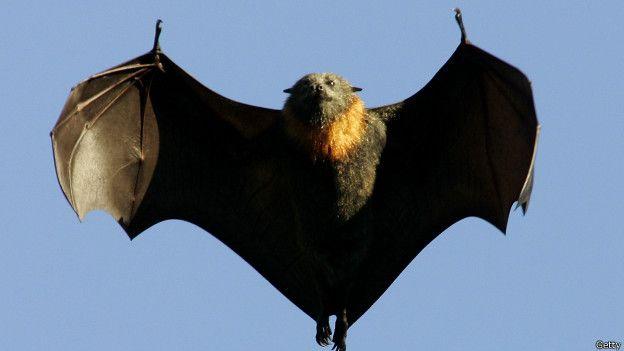 En Latinoamérica, además de los perros, la OMS apunta a los murciélagos como fuente de contagio.