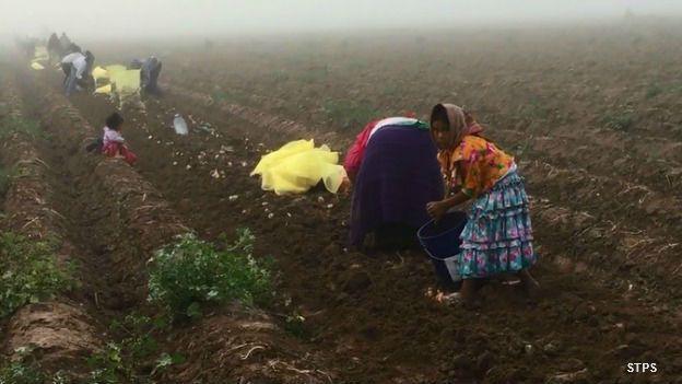 Niños jornaleros agrícolas en un campo de cultivo en México.