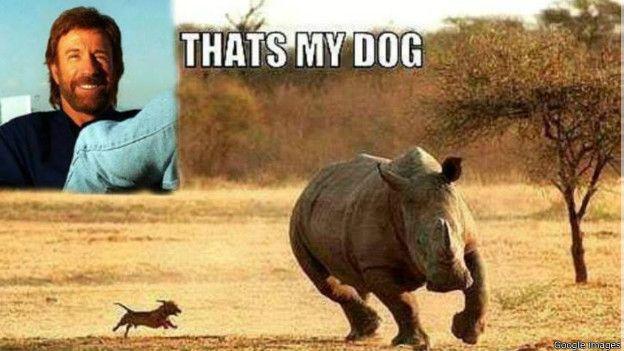 Los memes aludiendo a lo invencible que es Chuck Norris en sus películas son infinitos.