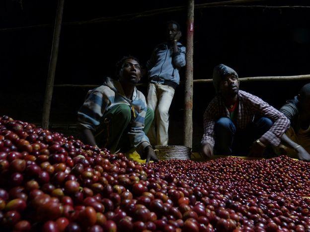 Trabajadores del café